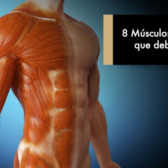 8 Músculos Olvidados que debes entrenar