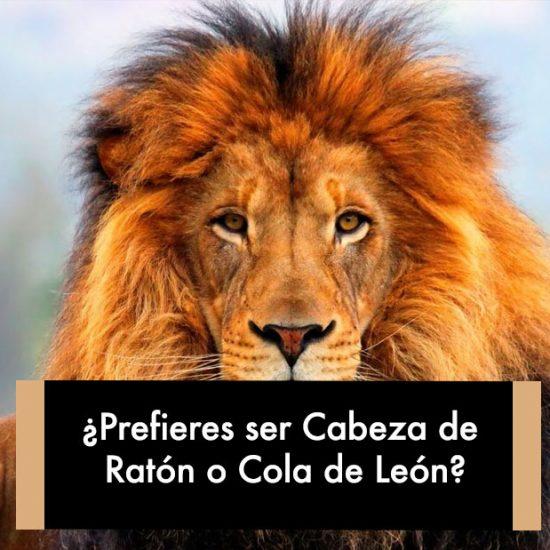 ¿Prefieres ser Cabeza de Ratón o Cola de León?